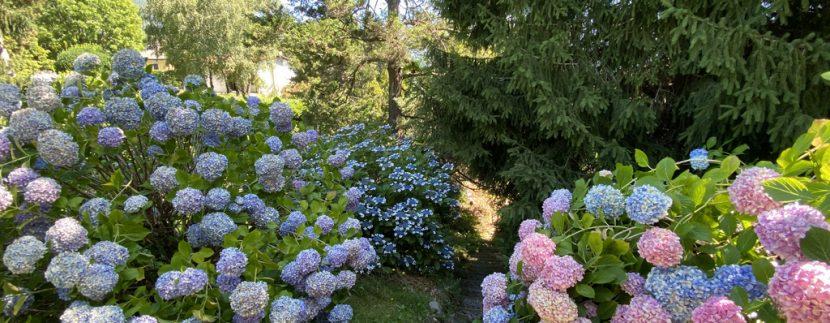 Rid. Lago Como Menaggio Villa con giardino (10)
